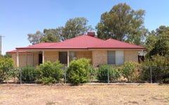 19 wattle, Culcairn NSW
