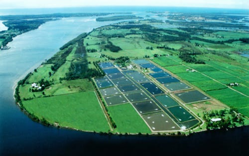 Tru Blu Prawn Farms, Yamba NSW 2464