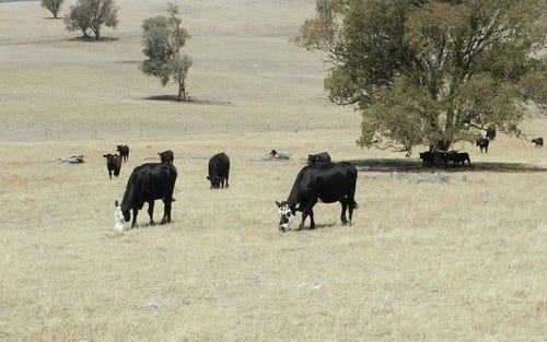 Lot 106 Off Boorowa Road, Crookwell NSW 2583