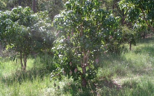 Lot 8 Bulldog Rd, Tabulam NSW 2469