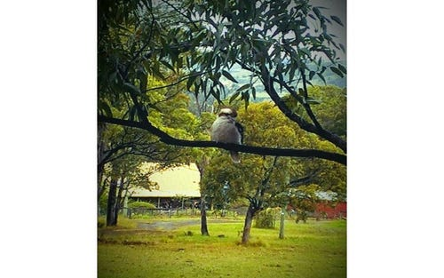 154 Wangat Trig Rd, Bandon Grove NSW 2420