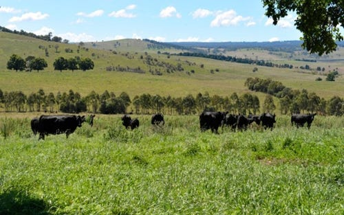 Calala Oxley Highway, Walcha NSW 2354