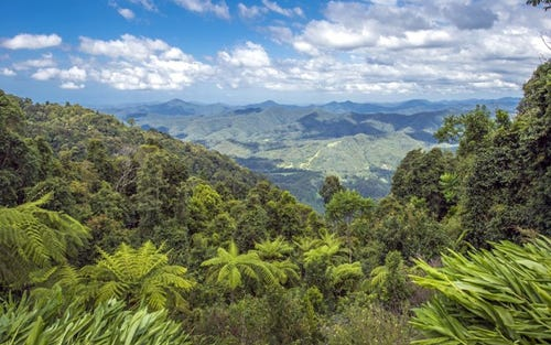 240 Mountain Top Road, Dorrigo NSW 2453