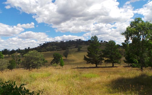 339 box forest road, Uralla NSW 2358