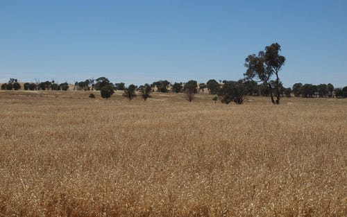 - 'Kingsclere', Cookardinia NSW 2650