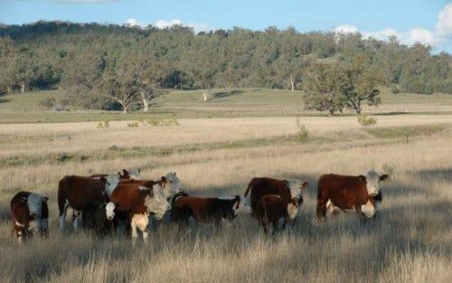 0000 Kamilaroi Highway, Quirindi NSW 2343