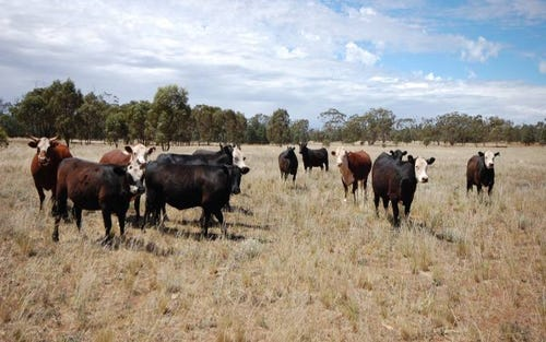 Back Hillston Road, Tabbita NSW 2652