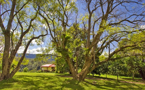 904 Darkwood Road, Bellingen NSW 2454