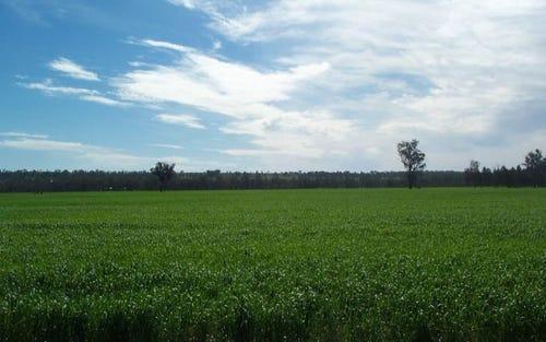 - Woolshed Farm, Temora NSW 2666