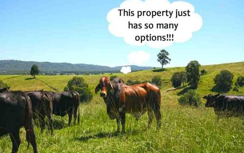 76 Mangrove Creek Road, Tullymorgan NSW 2463