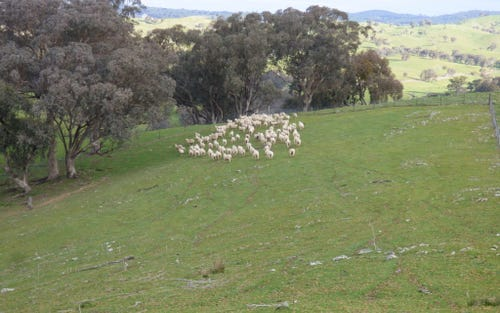 Lot 1, 2100 Taylor's Flat Road, Boorowa NSW 2586